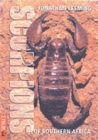 Image for Scorpions of Southern Africa
