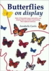 Image for Butterflies on Display