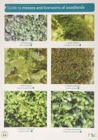 Image for Guide to Mosses and Liverworts of Woodlands