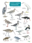Image for Guide to winter coastal birds