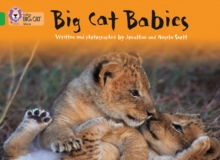 Image for Big cat babies