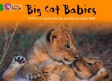 Image for Big Cat Babies