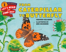 Image for From caterpillar to butterfly