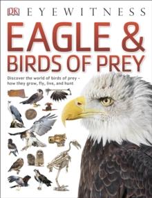Image for Eagle & birds of prey