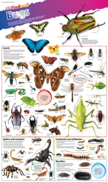 Image for DKfindout! Bugs Poster