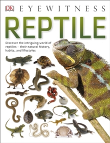 Image for Reptile