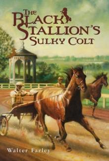 Image for The Black Stallion's Sulky Colt