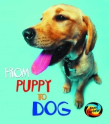 Image for From puppy to dog