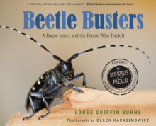 Image for Beetle busters: a rogue insect and the people who track it
