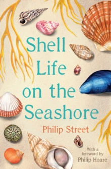 Image for Shell life on the seashore