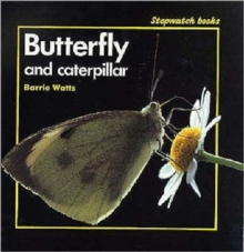 Image for Butterfly and Caterpillar