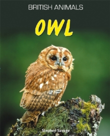 Owl - Savage, Stephen