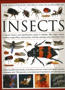 Image for The illustrated world encyclopedia of insects  : a natural history and identification guide to beetles, flies, bees, wasps, mayflies, dragonflies, cockroaches, mantids, earwigs, ants and many more