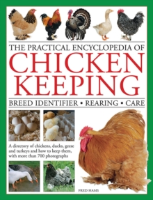 Image for The practical encyclopedia of chicken keeping  : breed identifier, rearing, care