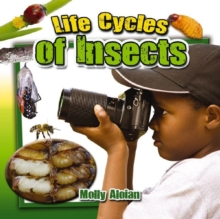Image for Life cycles of insects