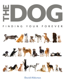 Image for The dog  : finding your forever