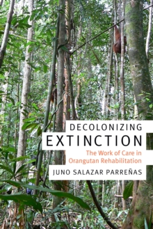 Image for Decolonizing extinction  : the work of care in orangutan rehabilitation