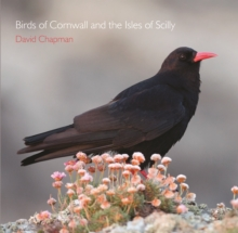 Image for Birds of Cornwall and the Isles of Scilly