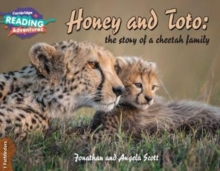 Image for Honey and Toto  : the story of a cheetah family1