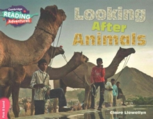 Image for Looking after animals
