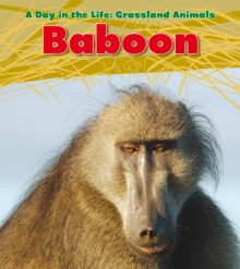 Image for Baboon