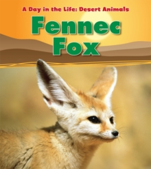 Image for Fennec fox