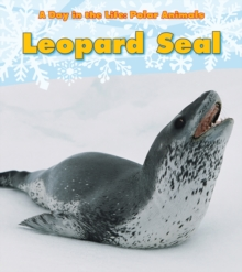 Image for Leopard seal