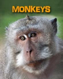 Image for Monkeys