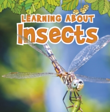Image for Learning about insects