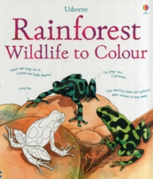 Image for Rainforest to Colour