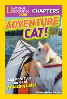 Image for Adventure cat!