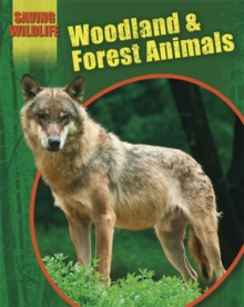 Image for Woodland and forest animals