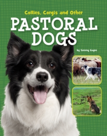 Image for Collies, corgis and other pastoral dogs