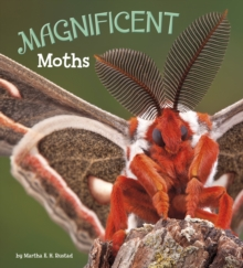 Image for Magnificent moths