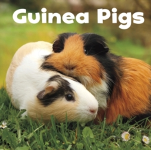 Image for Guinea pigs