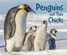Penguins and their chicks - Hall, Margaret
