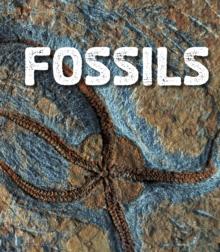 Fossils - Sawyer, Ava