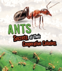 Ants  : secrets of their cooperative colonies - Kenney, Karen Latchana