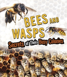 Image for Bees and wasps  : secrets of their busy colonies