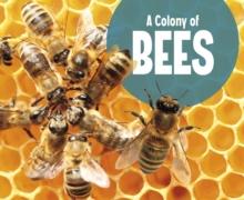 A colony of bees - Raatma, Lucia