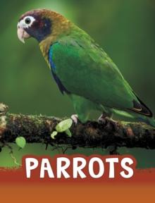Image for Parrots