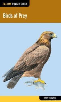 Image for Birds of prey