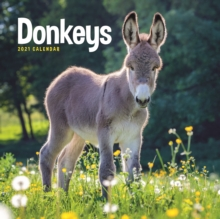 Image for Donkeys Square Wall Calendar 2021