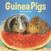 Image for Guinea Pigs Mini Square Wall Calendar 2022