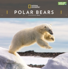 Image for Polar Bears National Geographic Square Wall Calendar 2022