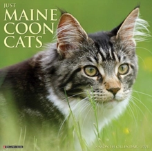 Image for Just Maine Coon Cats 2021 Wall Calendar