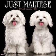Image for Just Maltese 2021 Wall Calendar (Dog Breed Calendar)