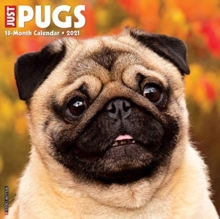 Image for Just Pugs 2021 Wall Calendar (Dog Breed Calendar)