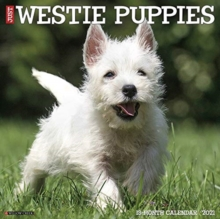 Image for Just Westie Puppies 2021 Wall Calendar (Dog Breed Calendar)