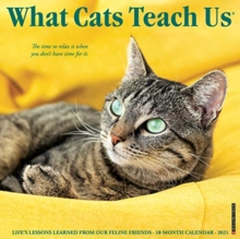 Image for What Cats Teach Us 2021 Wall Calendar